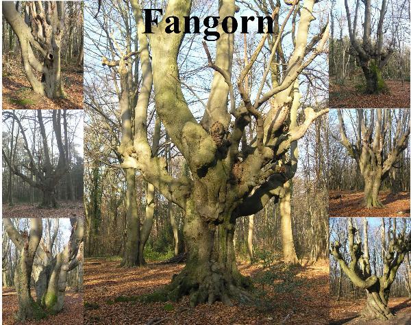 Bilder aus Fangorn