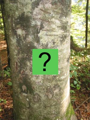 Baum 8