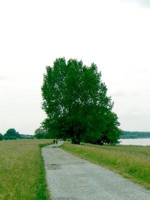 Alter Weidenmann