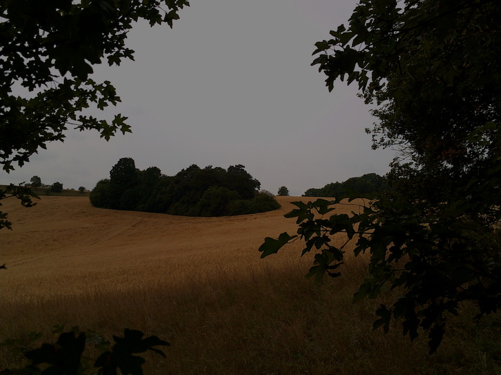 Sommer, Feld mit Bauminsel