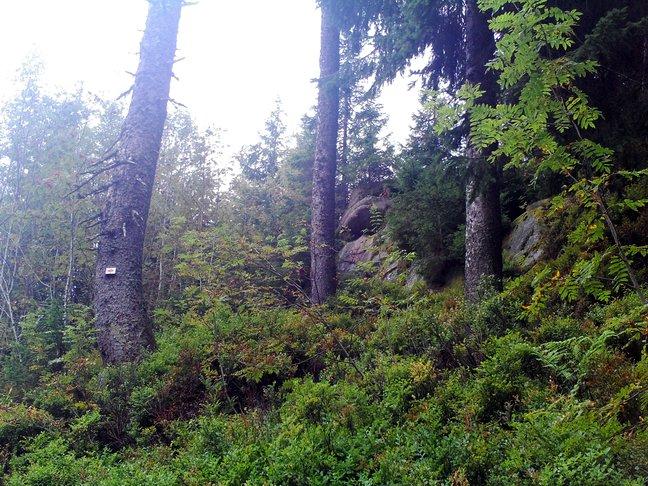 Felsen mit Nadelbäumen