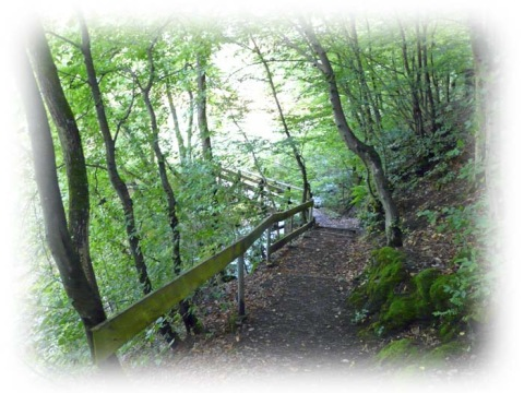 Weg zur Brücke