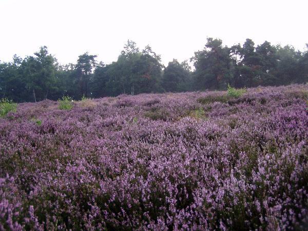 Heideflächen am Gehn