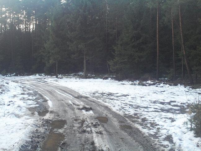 kurz vor Meura im Wald