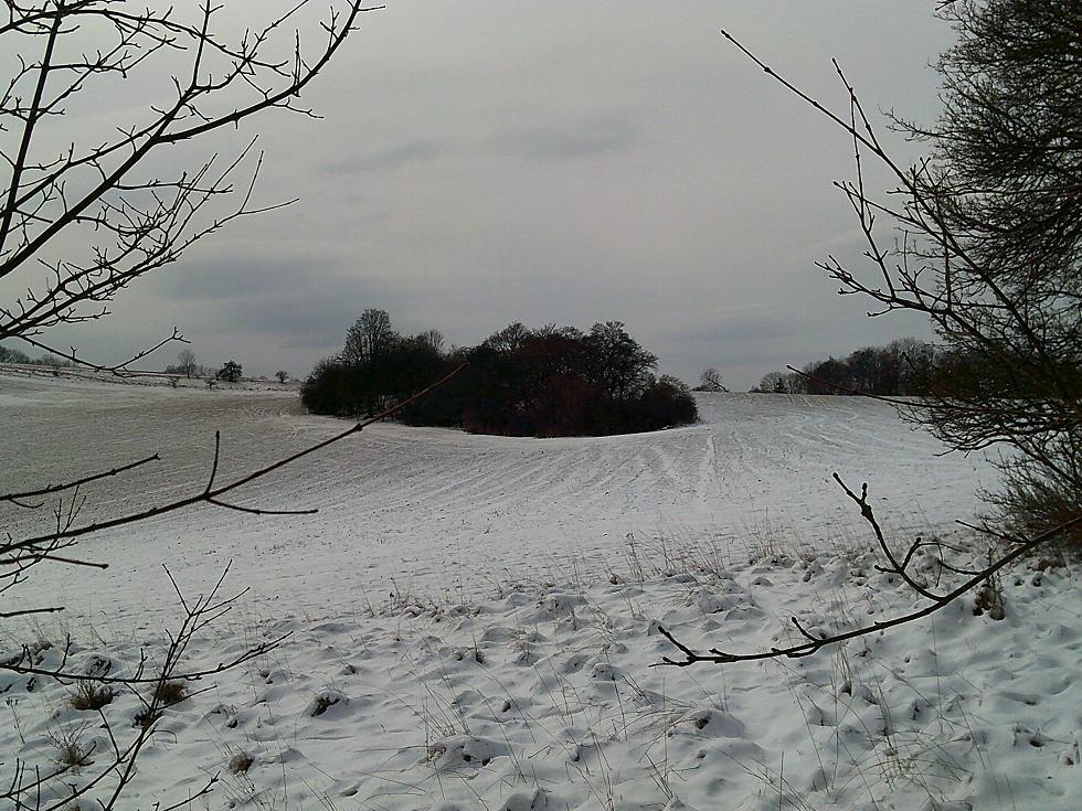 Winter, Feld mit Bauminsel
