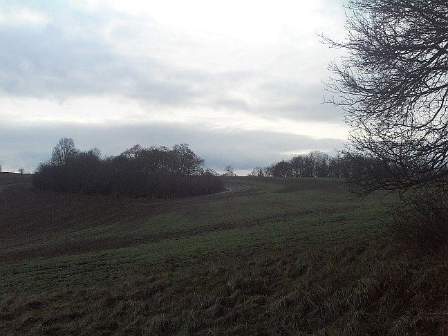 Herbst, Feld mit Bauminsel