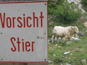 Vorsicht Stier / Attention: Bull